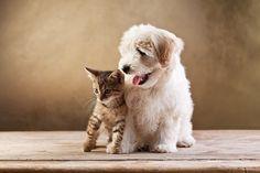 http://www.dogisto.com/5-cat-friendly-dog-breeds/