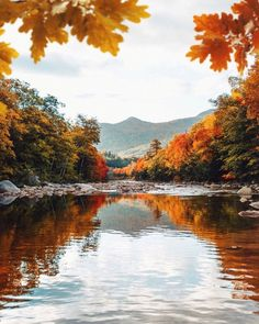 autumn leaves falling Autumn leaves reflected in a lake. Fall is such a beautiful season! Autumn Scenes, Autumn Aesthetic, Autumn Photography, Fall Pictures, Autumn Inspiration, Belle Photo, Cool Places To Visit, Beautiful Landscapes, Autumn Leaves