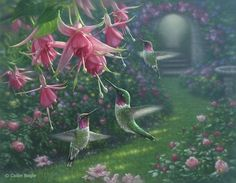 hummingbirds and fuchsia