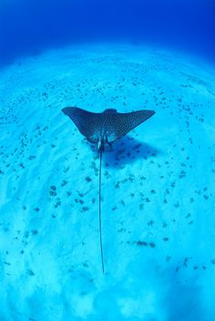Stingrays, sea turtles, schools of tropical fish and rare blue iguanas are just a few of the wildlife wonders in Grand Cayman. We recommend getting up close and personal with the rays at Stingray City. Take a boat ride out to meet as many as two-dozen docile stingrays. You can swim alongside them, touch and even feed them!