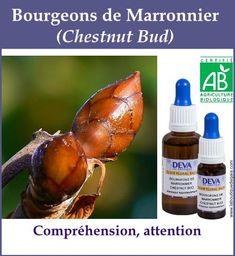 Bourgeon marronier 4 Gaia, Elixir Floral, Agriculture Biologique, Boutique, Gardening, Vegetables, Flower, Essential Oils, Natural Treatments