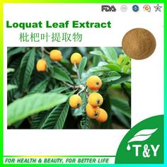 Sales! pure  Natural  Ursolic Acid Powder from Loquat Leaf Extract 1000g/lot