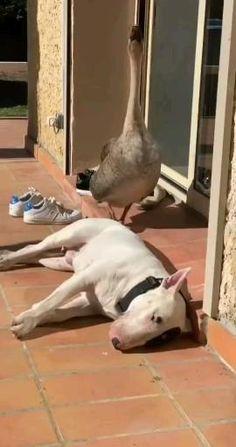 Super Cute Animals, Cute Funny Animals, Cute Dogs, Cute Animal Videos, Funny Animal Pictures, Feel Good Videos, Minion Jokes, Funny Birds, Dog Lady