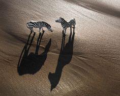 Great series of plastic animal photos. Zebra by Jeff Friesen