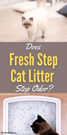 There's nothing worse than a litter box that smells bad. Can Fresh Step cat litter stop bad smells and is it right for your cat? #catlitterideas #freshstepcatlitter #lowdustcatlitter #bestcatlitter Automatic Litter Box, Best Cat Litter, Cat Reading, Lots Of Cats, Cat Life, Animal Shelter, Cool Cats, Kittens