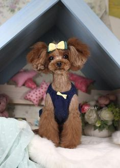 Korean Dog Grooming Style — Toy Poodle too cute Dog Grooming Styles, Dog Grooming Tips, Poodle Grooming, Poodle Cuts, Poodle Mix, Poodle Puppies, Lab Puppies, Cortes Poodle, I Love Dogs