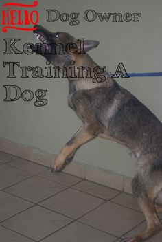 Many Beneficial Hints About Kennel Training A Dog You Require * Want additional info? Click on the image. Kennel Training A Dog, Crate Training, Dog Training Tips, Stress And Anxiety, Have Fun, Challenges, Puppies, Pets, Image
