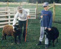 Halter Training Lambs, August 1999.JPG (21803 bytes)