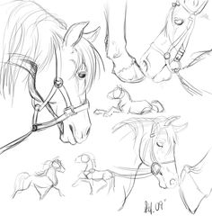 Horse sketches by nightspiritwing.deviantart.com on @deviantART