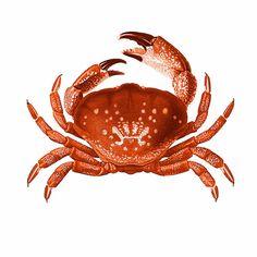 Crab Red Orange Nautical Vintage Style Art Print Beach House Decor via Etsy