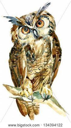 Owl Watercolor, Watercolor Artwork, Watercolor Animals, Owl Artwork, Hand Painting Art, Wildlife Art, Whimsical Art, Animal Paintings, Bird Art