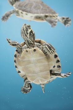 een mooie happy turtle