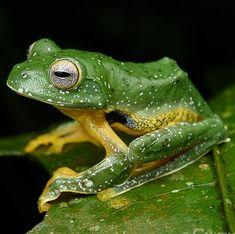 Nature Animals, Wild Animals, Cute Animals, Amphibians, Reptiles, Frosch Illustration, Wildlife Art, Photo Reference, Nature Photos