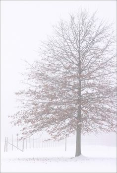 Ashtabula county, Ohio, USA   (by kuddlyteddybear2004)