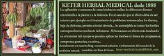 Hierbas Medicinales Mapuche