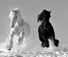 #black and #white