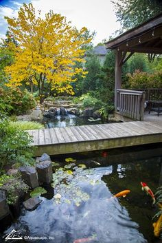 Preparing Your Pond for Cooler Temperatures Fall Koi Pond with Bridge Fish Ponds Backyard, Backyard Pool Designs, Koi Ponds, Backyard Waterfalls, Garden Ponds, Water Garden, Fish Pond Gardens, Koi Fish Pond, Small Gardens