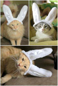 Bunny Cats!