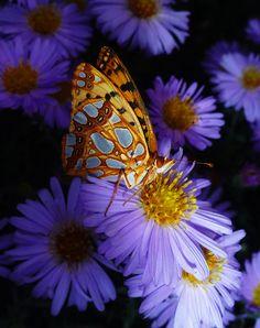 Butterfly by Razvan Ditescu