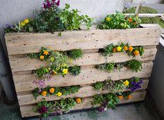 Faire son potager et cultiver des légumes en pot sur un balcon