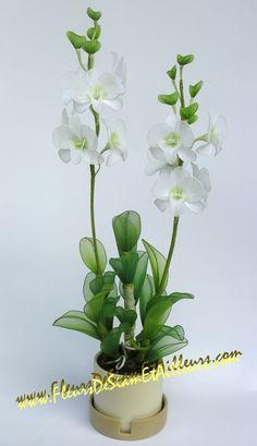 Orchidée Dendrobium Phalaenopsis