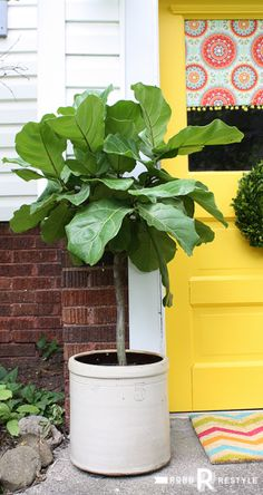 This Old House Side Door Makeover with Front Door Paint in the color Happy and  Fiddle Leaf Fig Tree - RobbRestyle.com
