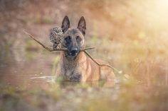 Teneri cuccioli Notizie: Ingo e Poldi, la strana amicizia fra gufo e cane./...