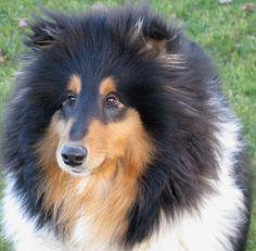chien cadeaux Thermique Je me promène mon chien Tasse de voyage ballon Dans ma tête amoureux des chiens Mug
