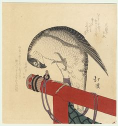 Hokkei (1780 - 1850) Japanese Woodblock - Falcon on a Perch Surimono