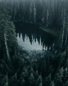 Breathtaking Moody And Mysterious Forest Photography By Dylan Furst - Breathtaking Moody And Mysterious Forest Photography By Dylan Furst Sie sind an der richtigen Stelle - Forest Photography, Landscape Photography, Mysterious Photography, Photography Couples, Photography Studios, Underwater Photography, Lifestyle Photography, Slytherin Aesthetic, Nature Adventure