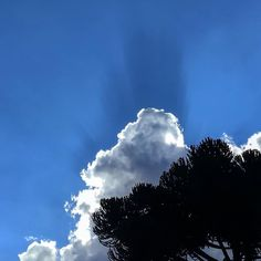 Bogotá sky.. #sky #bogota #bogotacolombia #colombia #clouds #tree #southamerica #silverlining #sunrays #nofilter #iphoneonly