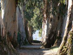 Castrelos Park. Vigo.