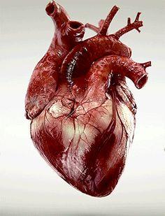 Corazón sangriento latiendo