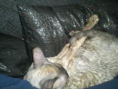 Kiera op haar rug in slaap gevallen