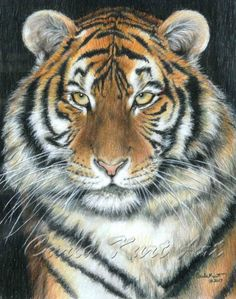 SONGHA Tiger by Carla Kurt signed print by CarlaKurtArt on Etsy, $45.00