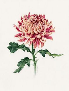 Crysanthemum. Part of the sleeve i want with birth month flowers.