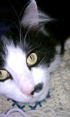 Asreal...Cat eyes