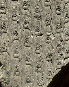Vegetales: Sigillaria fossil - Carbonífero (300 ma.)