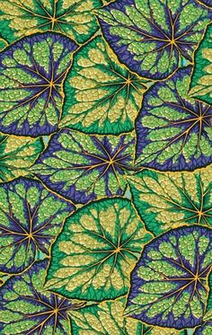 Begonia Leaves green - Phillips Jacob - this has the WOW factor