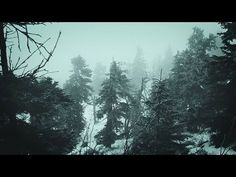 ❄️ Snowstorm Blizzard Wind Sounds For Sleeping, Relaxing Or Studying ~ Snow Winter Ambience - YouTube Calming Sounds, Nature Sounds, Storm Sounds, Rain Sounds, Wild Is The Wind, Deep Sleep Music, Virtual Field Trips, Sound Of Rain, Nature Gif