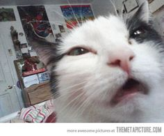 That moment when you want to sneeze but can't…