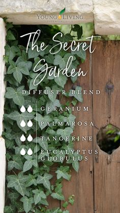 A bunch of diffuser blends that smell like a stack of books? Diffuse these essential oils to be swept away into your favorite classical novels! Essential Oil Perfume, Essential Oil Diffuser Blends, Doterra Essential Oils, Doterra Blends, Yl Oils, Young Living Oils, Young Living Essential Oils, Diffuser Recipes, Osho