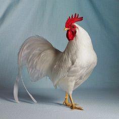 l'ortodimichelle: book fotografico del pollomodello