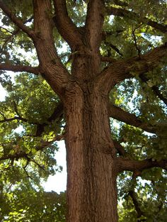 Strategically placed trees save up to 56 percent on annual air-conditioning costs.