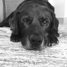 ~ OLD DOGS R THE BEST ~