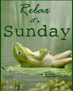 Learn to relax. It is a skill. This article will help you understand how to learn to relax and what will happen during the learning process. Weekend Humor, Bon Weekend, Hello Weekend, Weekend Vibes, Funny Animals, Cute Animals, Clever Animals, Vídeos Youtube, Funny Frogs