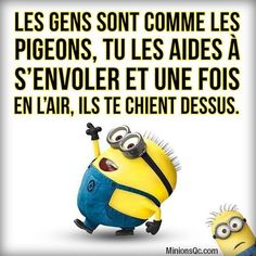 Minion Humour, Minion Meme, Funny Quotes, Funny Memes, One Liner, Humor, Life Advice, Poses, Sarcasm