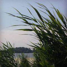 The perfect spot when it's hot! #zevenhuizerplas #rotterdam #relaxing #relax #lake #landscape #bluesky #nature #summer #latergram #weekend