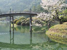 ヤブシタコウジ  Google+  香川県、栗林公園の桜