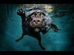 ¡Mira qué bien se lo pasan estos perritos en el agua!